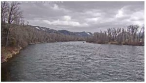 snake river fishing report