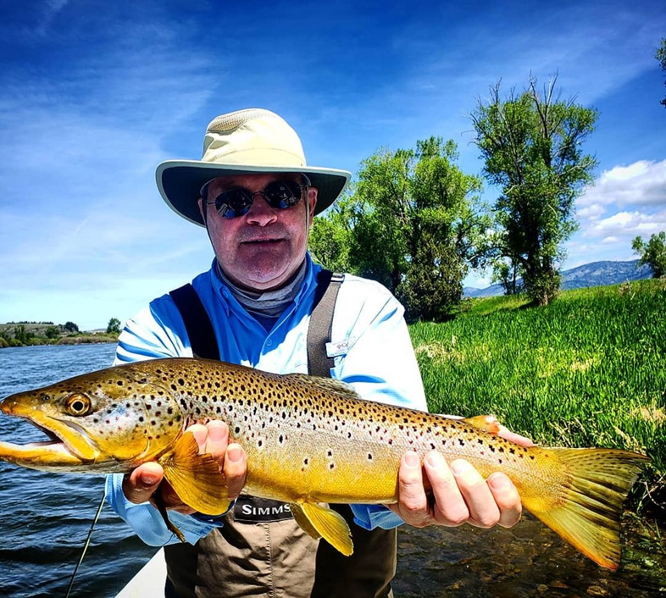 south fork fishing report - brown trout